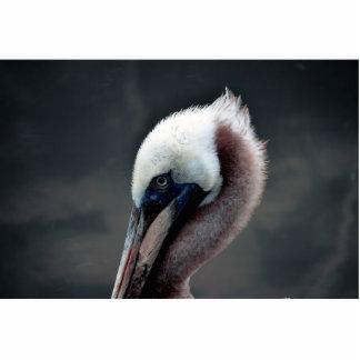 pájaro joven del lado de la opinión de la cabeza d escultura fotográfica