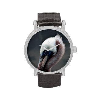 pájaro joven del lado de la opinión de la cabeza d relojes