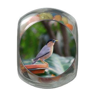 Pájaro Jarrones De Cristal