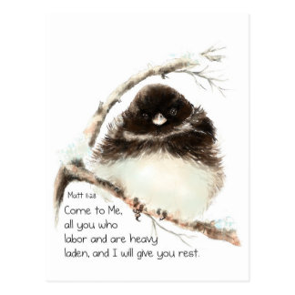 Pájaro lindo del Junco, escritura, 11:28 de Matt, Postales