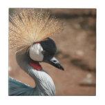 Pájaro loco del pelo azulejo cerámica