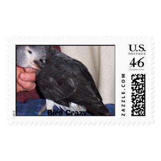 Pájaro loco - modificado para requisitos particula