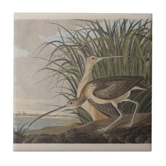 Pájaro longirrostro de la lavandera de zarapito de tejas
