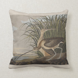 Pájaro longirrostro de la lavandera de zarapito de cojin