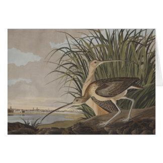 Pájaro longirrostro de la lavandera de zarapito de tarjeta de felicitación