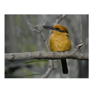 Pájaro magnífico tarjetas postales