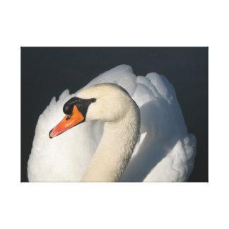 Pájaro majestuoso del cisne blanco en agua impresión en lona estirada