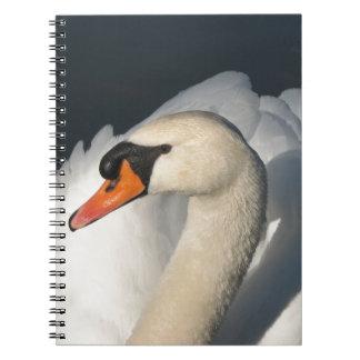 Pájaro majestuoso del cisne blanco en agua