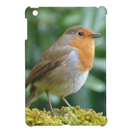 Pájaro maravilloso