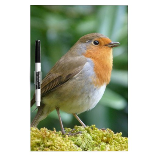 Pájaro maravilloso pizarras