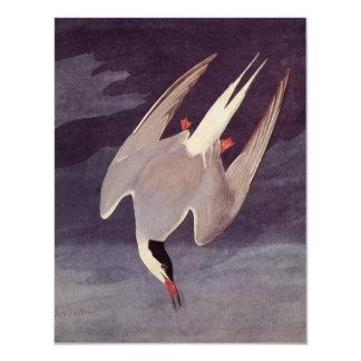 Pájaro marino del vintage, golondrina de mar invitación