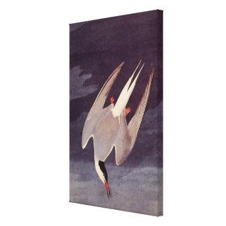 Pájaro marino del vintage, golondrina de mar impresiones en lona estiradas