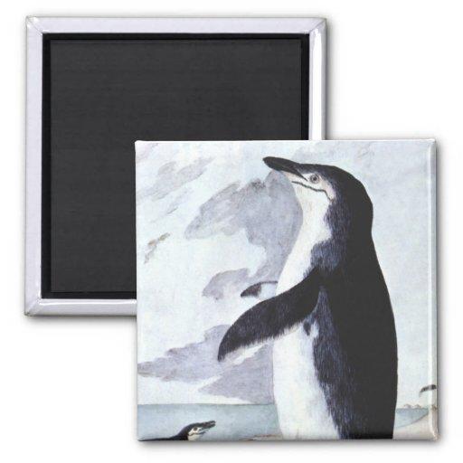 Pájaro marino del vintage, pingüino la Antártida d Imán