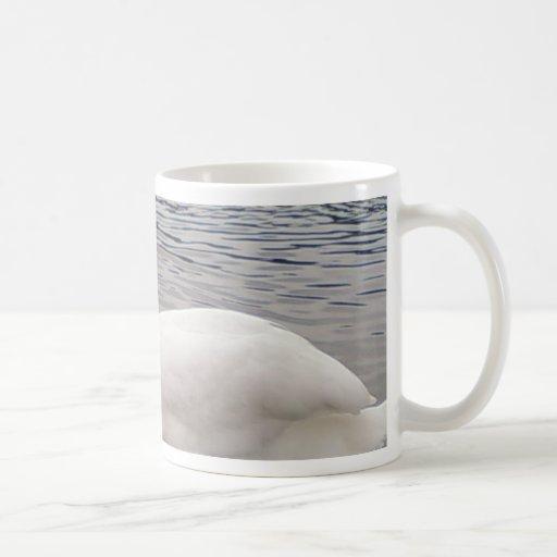 Pájaro masculino del cisne tazas de café