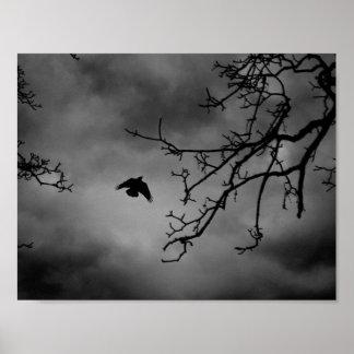 Pájaro misterioso en vuelo póster