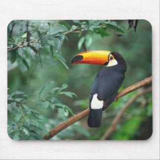 Pájaro Mousepad de Toco Toucan Alfombrilla De Raton
