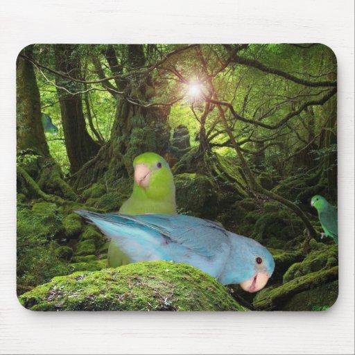 Pájaro MousePad tropical de Parrotlet de la selva  Alfombrillas De Raton