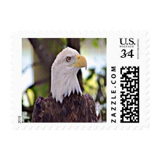 Pájaro nacional calvo de Eagle (Estados Unidos) Sellos Postales