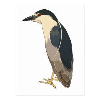 pájaro Negro-coronado de la garza de noche Postal