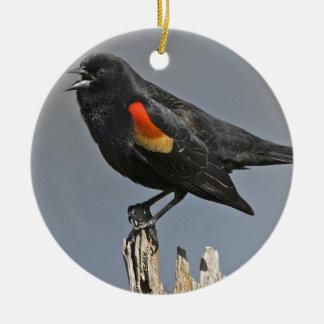 Pájaro negro de alas rojas