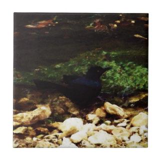 """""""Pájaro negro por la teja de The Creek"""" -"""