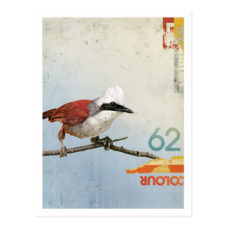 Pájaro No.3 Postal