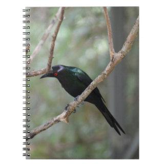 pájaro observado rojo que mira abajo spiral notebook
