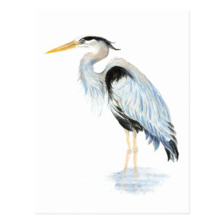 Pájaro original de la garza de gran azul de la acu tarjetas postales