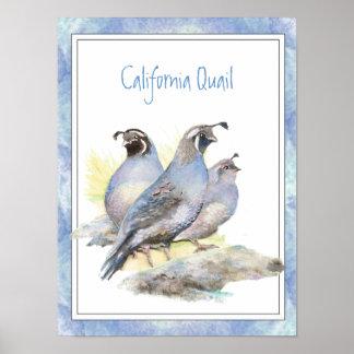 Pájaro original de las codornices de California de Póster
