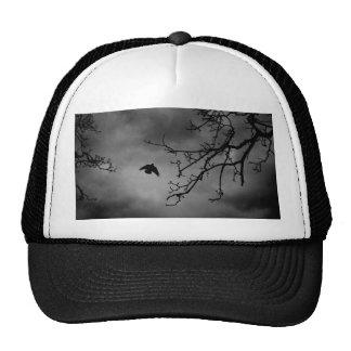 Pájaro oscuro en vuelo gorras