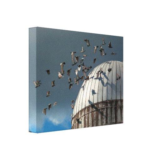 Pájaro - PÁJAROS Lona Envuelta Para Galerias