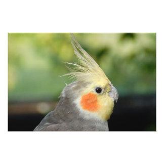Pájaro Fotografías