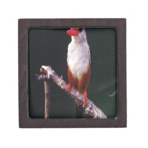 Pájaro precioso caja de joyas de calidad