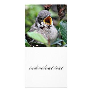 pájaro precioso tarjetas fotograficas