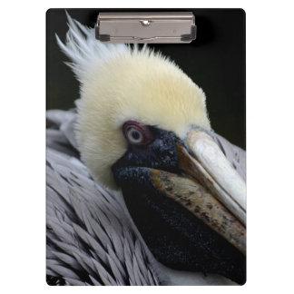 pájaro principal ascendente cercano de la opinión