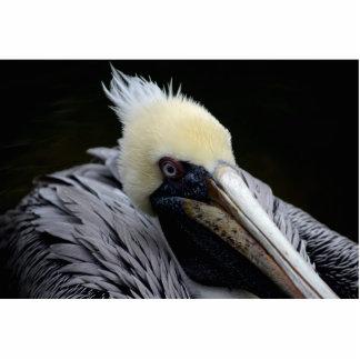 pájaro principal ascendente cercano de la opinión  escultura fotográfica