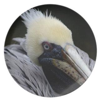pájaro principal ascendente cercano de la opinión  plato