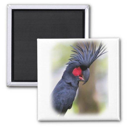 Pájaro principal del mascota del COCKATOO de la pa Imanes Para Frigoríficos
