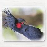 Pájaro principal del mascota del COCKATOO de la pa Alfombrilla De Raton