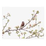 Pájaro que canta con las flores de la primavera tarjeta postal