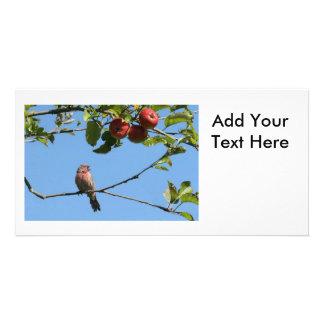 Pájaro que canta en un manzano tarjetas fotográficas