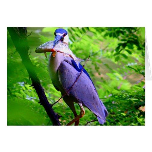 Pájaro que come pescados tarjeta pequeña