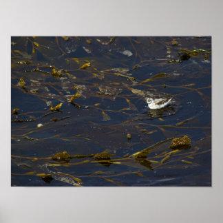 Pájaro que flota a través del poster del quelpo