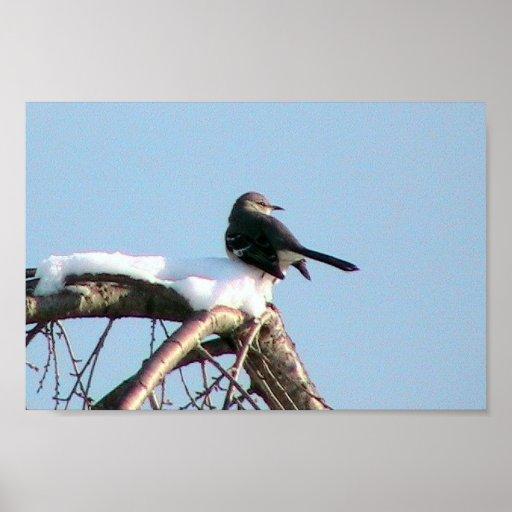 Pájaro que imita en árbol impresiones