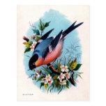 Pájaro retro del vintage en la postal de la rama