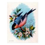 Pájaro retro del vintage en una postal de la rama