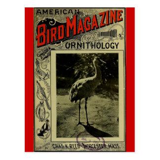Pájaro revista 3 de julio de 1903 postal