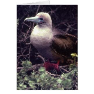 Pájaro Rojo-Con base único Tarjeta Pequeña