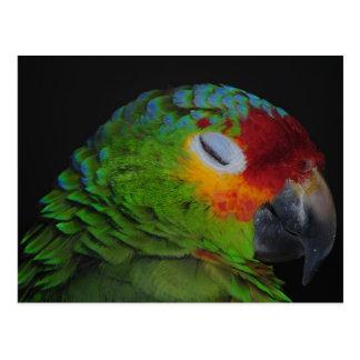 Pájaro rojo de Lored el Amazonas que guiña la post Tarjeta Postal