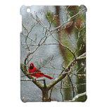 Pájaro rojo en invierno